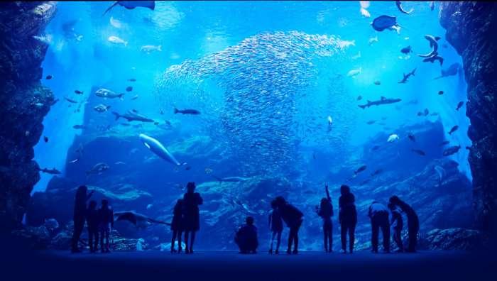 宮城×愛人デートスポット①:仙台うみの杜水族館