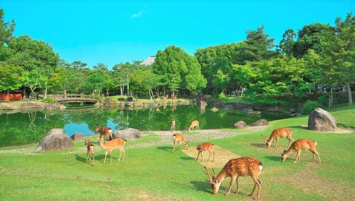奈良×愛人デートスポット①:奈良公園